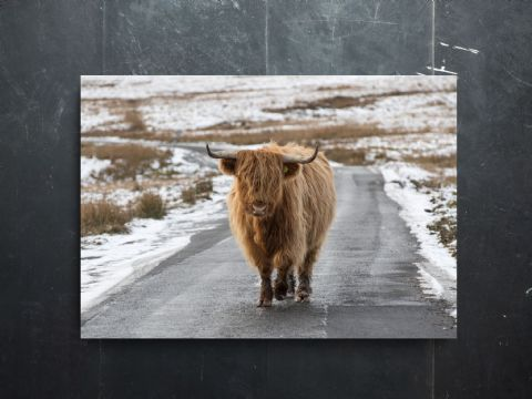 On the Road - Again Highland Cow Large Canvas Print